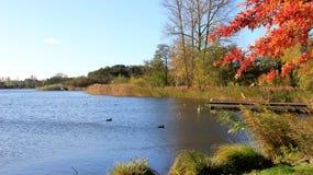 Hojas de otoño con el pequeño pantano azul imagen de archivo