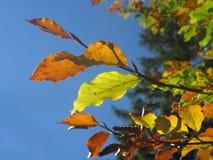 Hojas de otoño con la luz opuesta fotos de archivo
