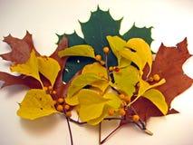 Hojas de otoño con las bayas amarillas Imagenes de archivo