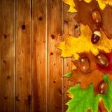 Hojas de otoño con las bellotas del roble Fotos de archivo