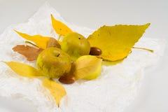 Hojas de otoño con las manzanas Imágenes de archivo libres de regalías