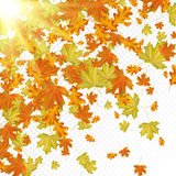 Hojas de otoño con los rayos del sol Fotografía de archivo libre de regalías