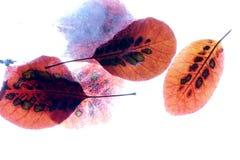 Hojas de otoño congeladas Fotos de archivo libres de regalías