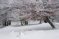 Hojas de otoño congeladas en la rama nevosa fotografía de archivo libre de regalías