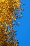 Hojas de otoño contra el cielo Foto de archivo