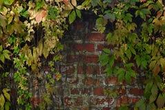 Hojas de otoño contra una pared de ladrillo roja Imágenes de archivo libres de regalías