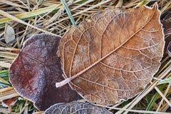 Hojas de otoño cubiertas en helada temprana Fotos de archivo