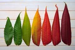 Hojas de otoño de Colorfull Fotografía de archivo libre de regalías