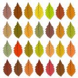 Hojas de otoño de diverso color trama Fotos de archivo