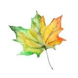 Hojas de otoño de la acuarela Imagenes de archivo