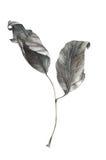 Hojas de otoño de la acuarela Imagen de archivo libre de regalías