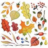 Hojas de otoño de la acuarela, bayas, insectos, ramas fijadas Foto de archivo