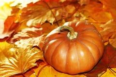 Hojas de otoño de la calabaza de la acción de gracias Fotos de archivo