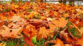 Hojas de otoño de la hierba, resbalador almacen de video