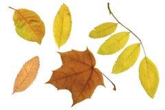 Hojas de otoño de ѯlorful Fotografía de archivo