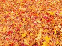 Hojas de otoño de oro Imagen de archivo libre de regalías
