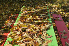 Hojas de otoño de oro Fotos de archivo libres de regalías