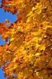 Hojas de otoño de oro Foto de archivo libre de regalías