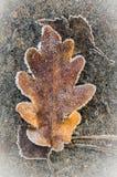 Hojas de otoño debajo de la escarcha Imagen de archivo
