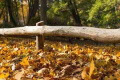 Hojas de otoño debajo de una cerca de madera Imagen de archivo libre de regalías