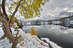 Hojas de otoño del alerce cerca del lago alpino Fotografía de archivo libre de regalías