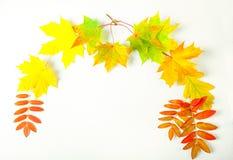 Hojas de otoño del color en un fondo blanco Fotografía de archivo libre de regalías