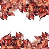Hojas de otoño del marrón de la acuarela del vector para su Imágenes de archivo libres de regalías