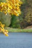 Hojas de otoño del roble contra el lago Foto de archivo libre de regalías