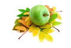 Hojas de otoño del serbal-árbol Imagen de archivo