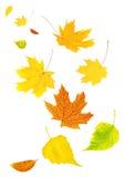 Hojas de otoño del vuelo Imagen de archivo libre de regalías