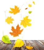 Hojas de otoño del vuelo Foto de archivo libre de regalías