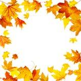 Hojas de otoño del vuelo Fotos de archivo libres de regalías