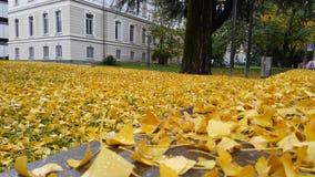 Hojas de otoño delante de una universidad foto de archivo libre de regalías