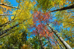 Hojas de otoño en árboles Imagen de archivo libre de regalías