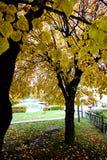 Hojas de otoño en árboles Fotos de archivo