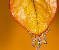 Hojas de otoño en agua foto de archivo libre de regalías