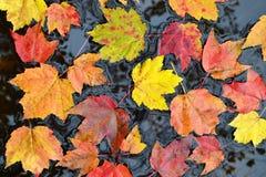 Hojas de otoño en agua imagen de archivo libre de regalías