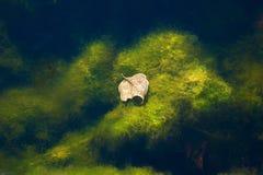 Hojas de otoño en agua Foto de archivo