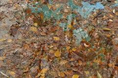 Hojas de otoño en agua Fotos de archivo libres de regalías