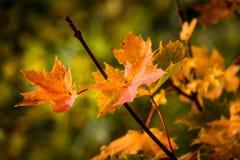 Hojas de otoño en Bedlington Foto de archivo libre de regalías