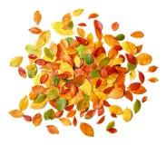 Hojas de otoño en blanco Fotos de archivo