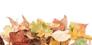 Hojas de otoño en blanco Fotos de archivo libres de regalías
