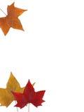 Hojas de otoño en blanco Imagenes de archivo