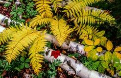 Hojas de otoño en bosque Imágenes de archivo libres de regalías