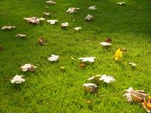 Hojas de otoño en césped foto de archivo libre de regalías