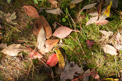 Hojas de otoño en césped Fotografía de archivo
