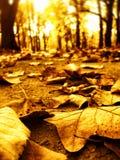 Hojas de otoño en camino del parque Imagenes de archivo