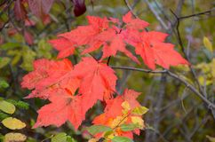 Hojas de otoño en el Adirondacks Fotos de archivo