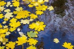 Hojas de otoño en el agua Imágenes de archivo libres de regalías