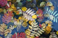 hojas de otoño en el agua Fotos de archivo